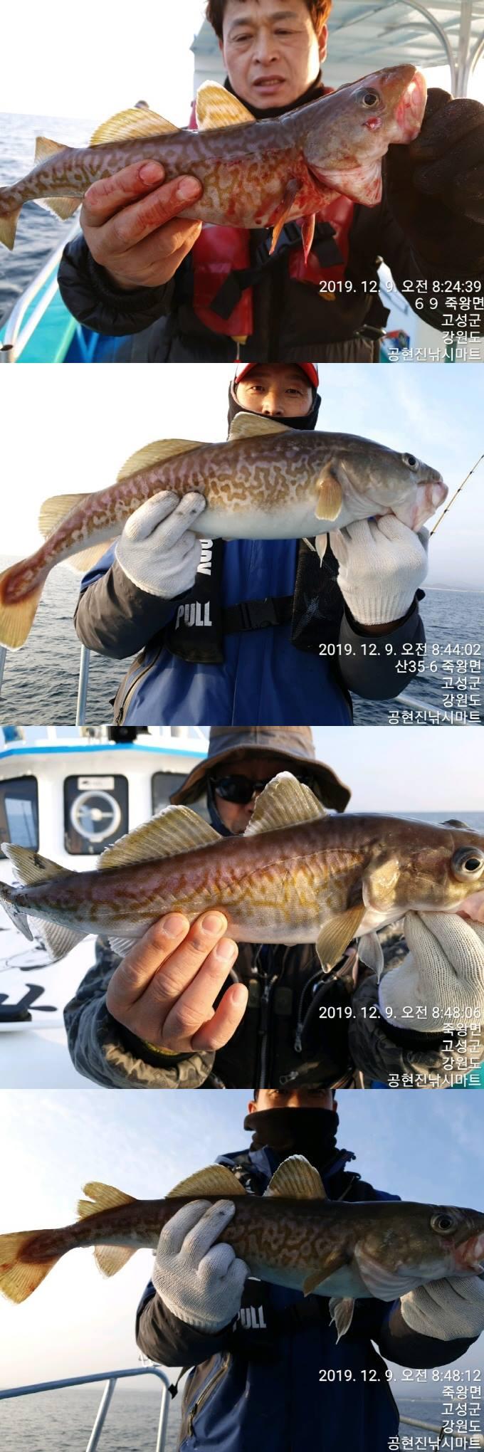 22인승 돌핀마린호 / 대구 대박 조황~ 입니다