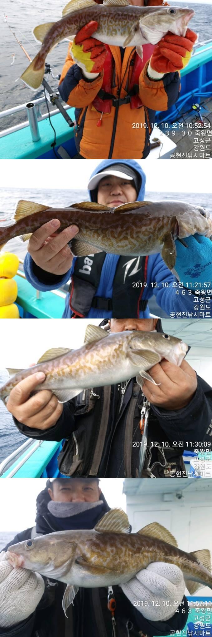 22인승 돌핀마린호 / 대구 조황~ 입니다