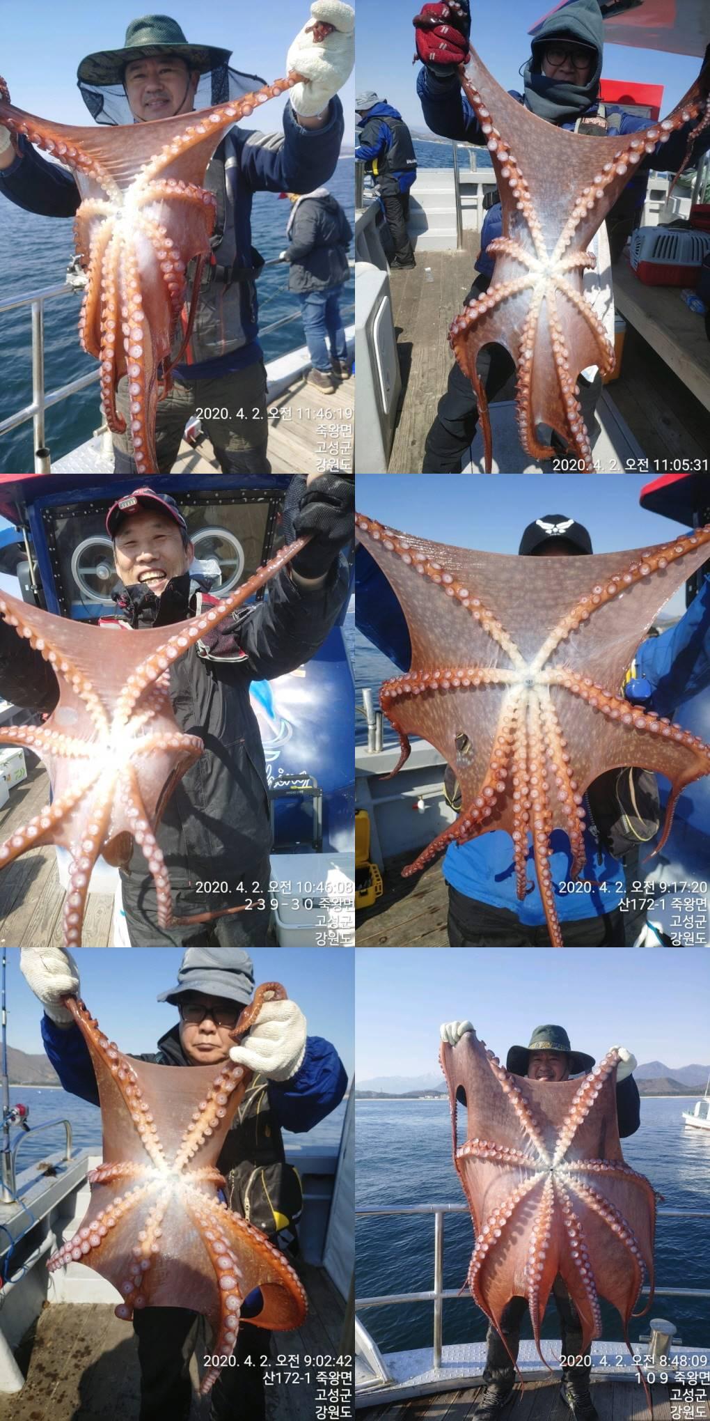 22인승 돌핀호 / 문어 대박~ 조황입니다~
