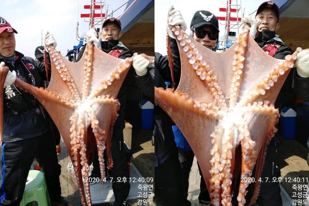 22인승 돌핀호 / 대왕문어 초~대박 조황입니다~