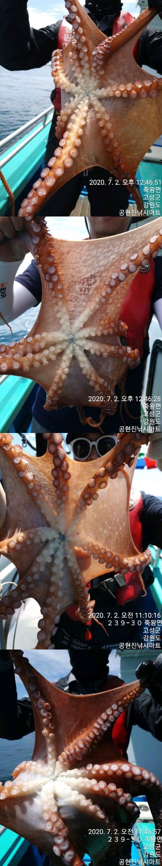 22인승 돌핀마린호 / 문어 낚시 조황입니다.