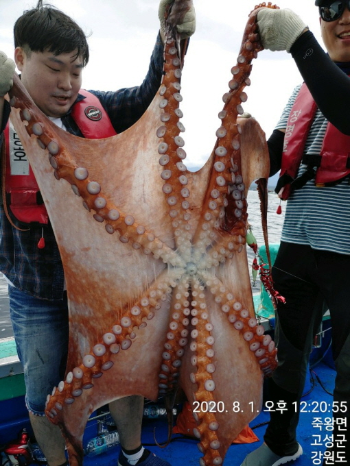 11인승 장명호 / 대왕문어 대~~박 조황입니다