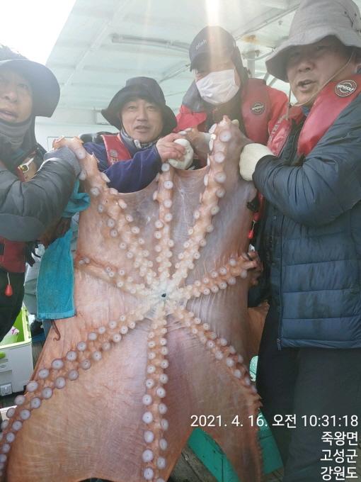 22인승 돌핀마린호 / 괴물급 대왕문어 조황입니다.